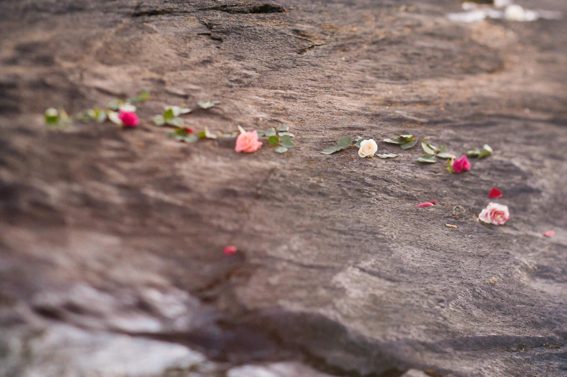 À propos - chemin de roses